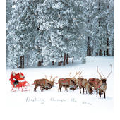 Pack of 5 Glittered Dashing Through The Snow Marie Curie Charity Christmas Cards