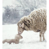 Pack of 5 With Love At Christmas Shelter & Crisis Charity Christmas Cards