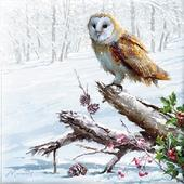 Box of 10 Owl & Kingfisher Christmas Cards In 2 Designs By Paper House