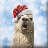 Box of 10 Festive Llamas Christmas Cards In 2 Designs By Avanti