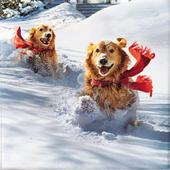 Box of 10 Retrievers In The Snow Christmas Cards In 2 Designs By Avanti