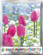 Pack of 4 Pink Tulips Greenfingers Blank Charity Greeting Cards