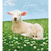 Pack of 5 Spring Lamb Happy Easter Greetings Cards