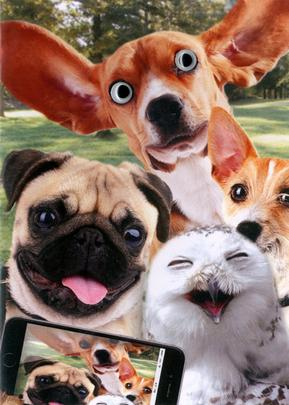 Cats & Dogs Photo Any Occasion Greeting Card