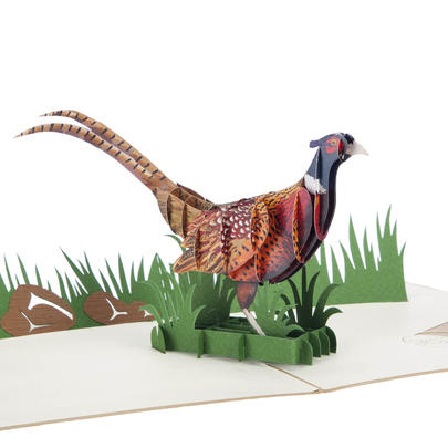 Pheasant Pop-Up Any Occasion Greeting Card Blank Inside