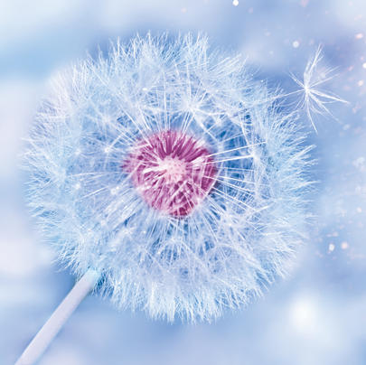 Dandelion Clock Blank Any Occasion Greeting Card