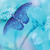 Blue Butterfly Blank Any Occasion Greeting Card