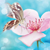 Pink Flower With Butterfly Blank Any Occasion Greeting Card