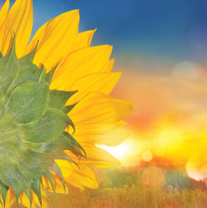 Sunflower Blank Any Occasion Greeting Card