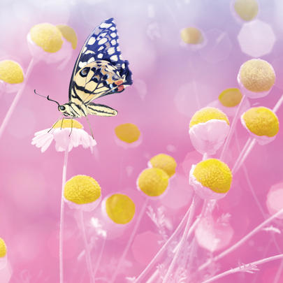 Butterfly With Small Yellow Flowers Blank Any Occasion Greeting Card