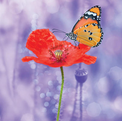 Poppy With Butterfly Blank Any Occasion Greeting Card