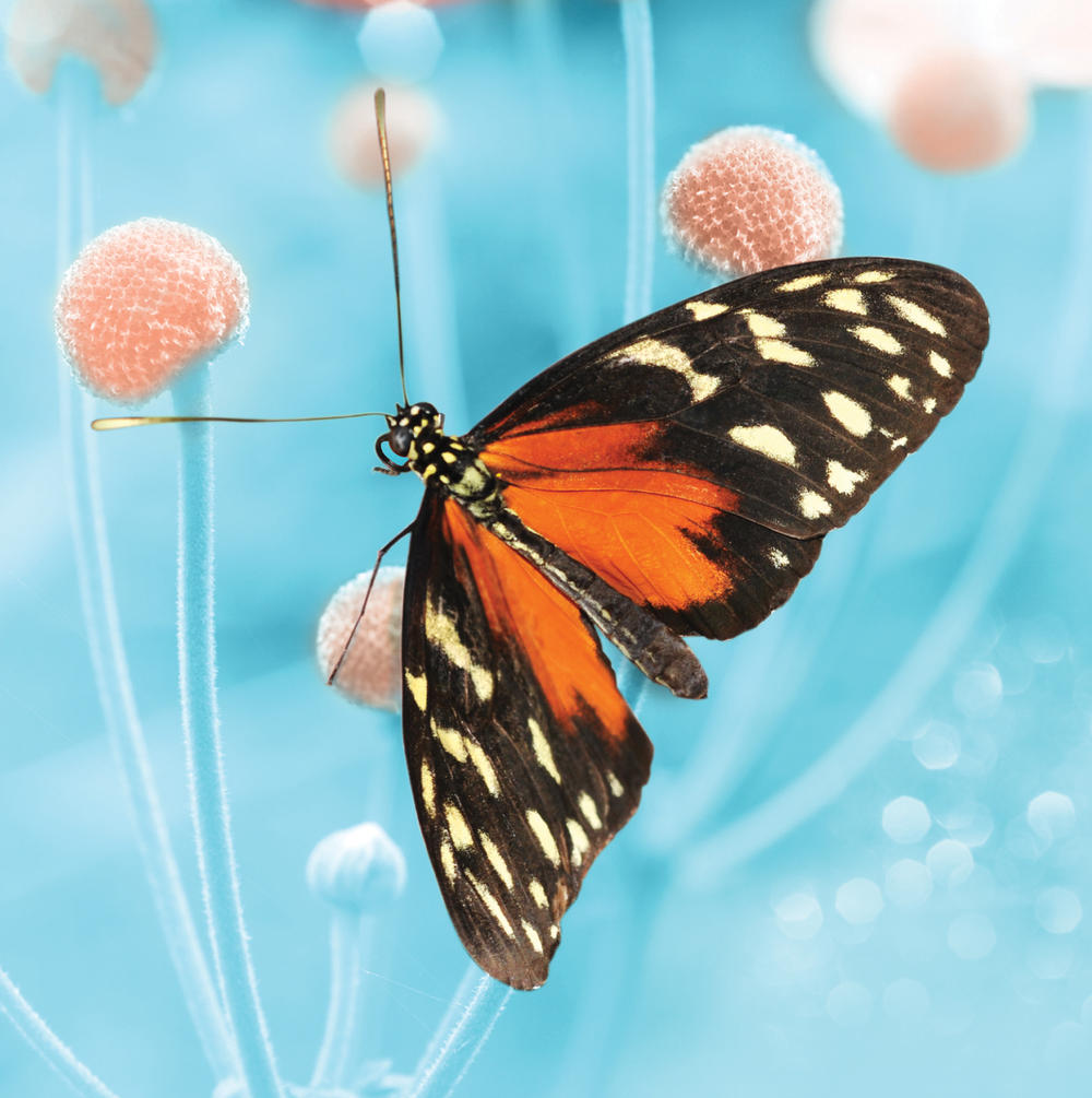 Black And Red Butterfly Blank Any Occasion Greeting Card
