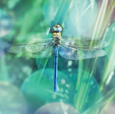 Dragonfly Blank Any Occasion Greeting Card