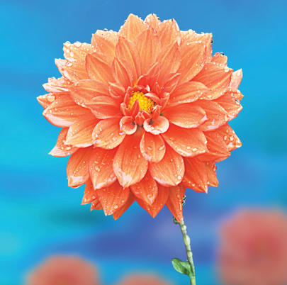 Orange Flower On Blue Blank Any Occasion Greeting Card