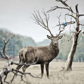 Stag Blank Any Occasion Greeting Card