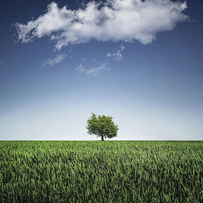 Tree In Field Blank Any Occasion Greeting Card