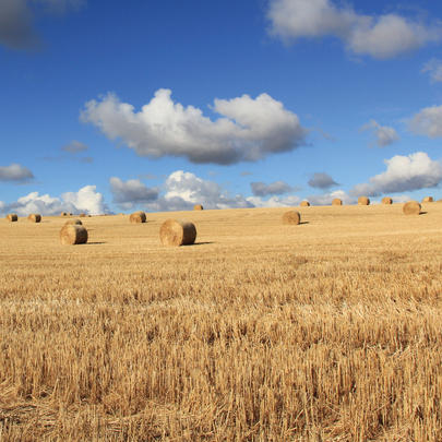 Hay Bales In Meadow Blank Any Occasion Greeting Card