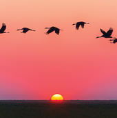 Birds Flying At Sunset Blank Any Occasion Greeting Card