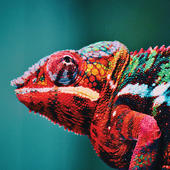 Chameleon Blank Any Occasion Greeting Card