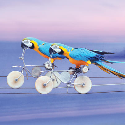 Parrots On Bikes  Blank Any Occasion Greeting Card