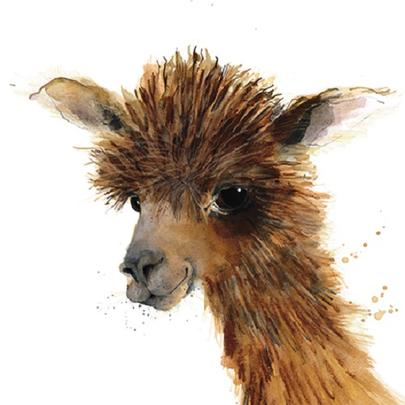 Alpaca Animal Magic Square Art Greeting Card Blank Inside