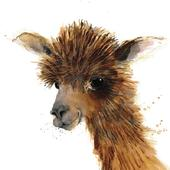 Alpaca Animal Magic Square Art Greeting Card Blank Inside