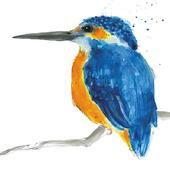 Kingfisher Animal Magic Square Art Greeting Card Blank Inside