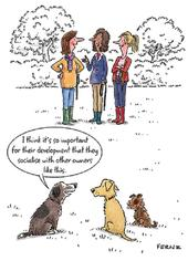 Socialise With Other Dog Owners Funny Birthday Greeting Card