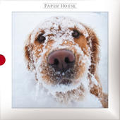Box of 16 Puppies In The Snow Photographic Christmas Cards