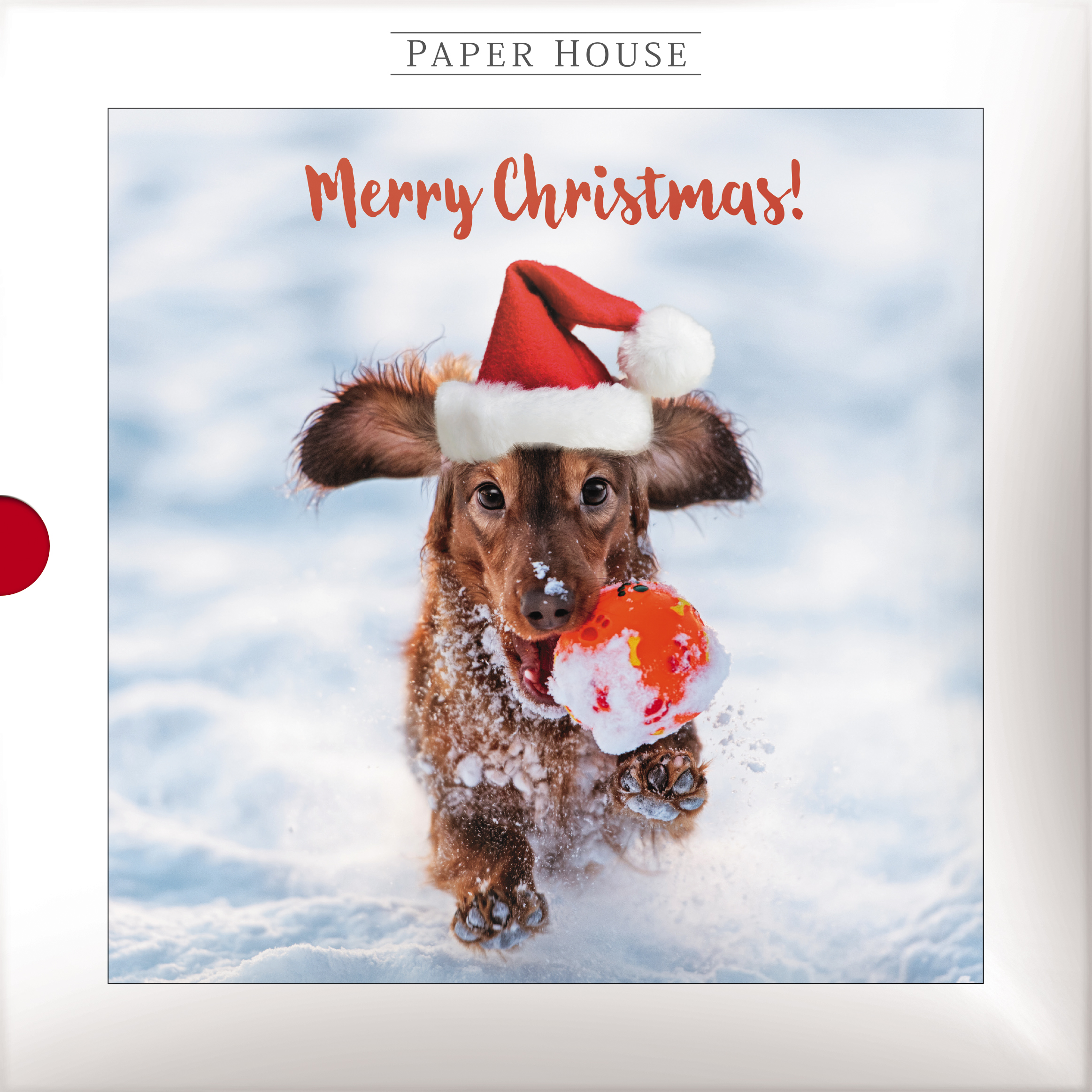 Box Of 16 Christmas Cats Dogs Photographic Christmas Cards Cards