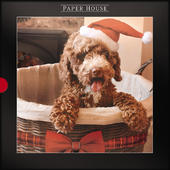 Box of 16 Cockapoo Festive Puppy  Photographic Christmas Cards
