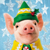 Box of 10 Avanti Cute Christmas Piglets Christmas Cards In 2 Designs