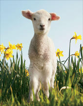 Pack of 6 RSPCA Charity Easter Greeting Cards In Same The Design