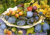 Blank Photo Art Fruit Plums Greeting Card