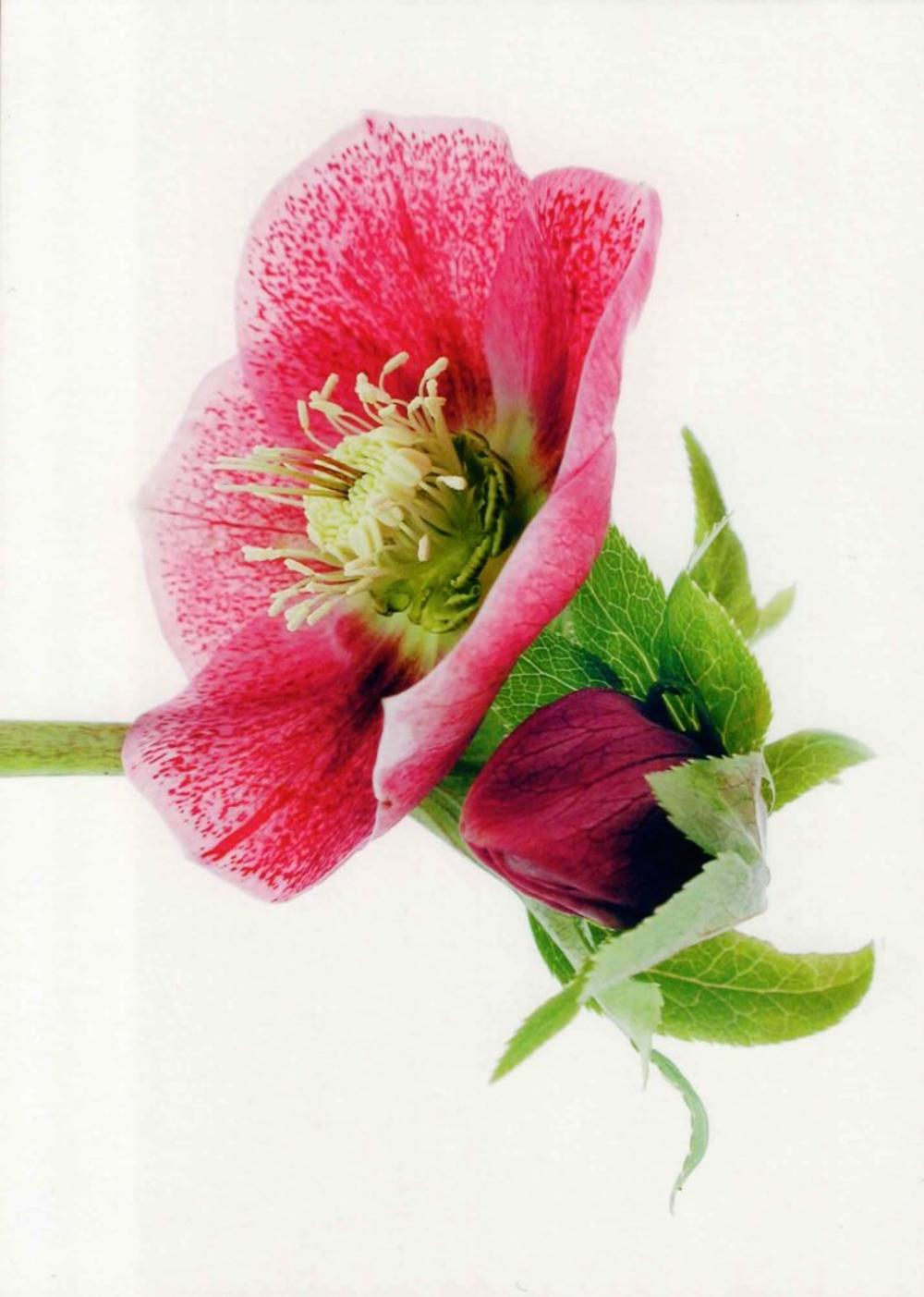 Blank Photo Art Flower Greeting Card