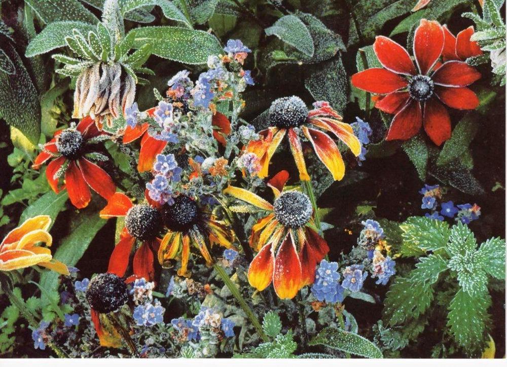 Blank Photo Art Flowers Greeting Card