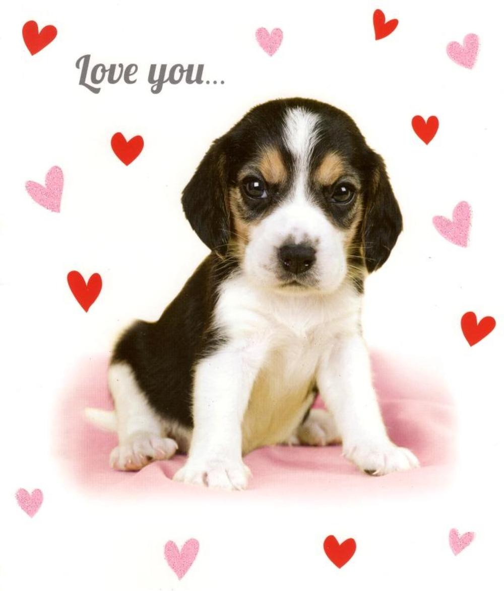 Love You Sooo Much Card Cute Puppy Valentine's Card