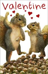 Dancing Squirrels I'm Nuts About You Valentines Day Card Valentine Cards