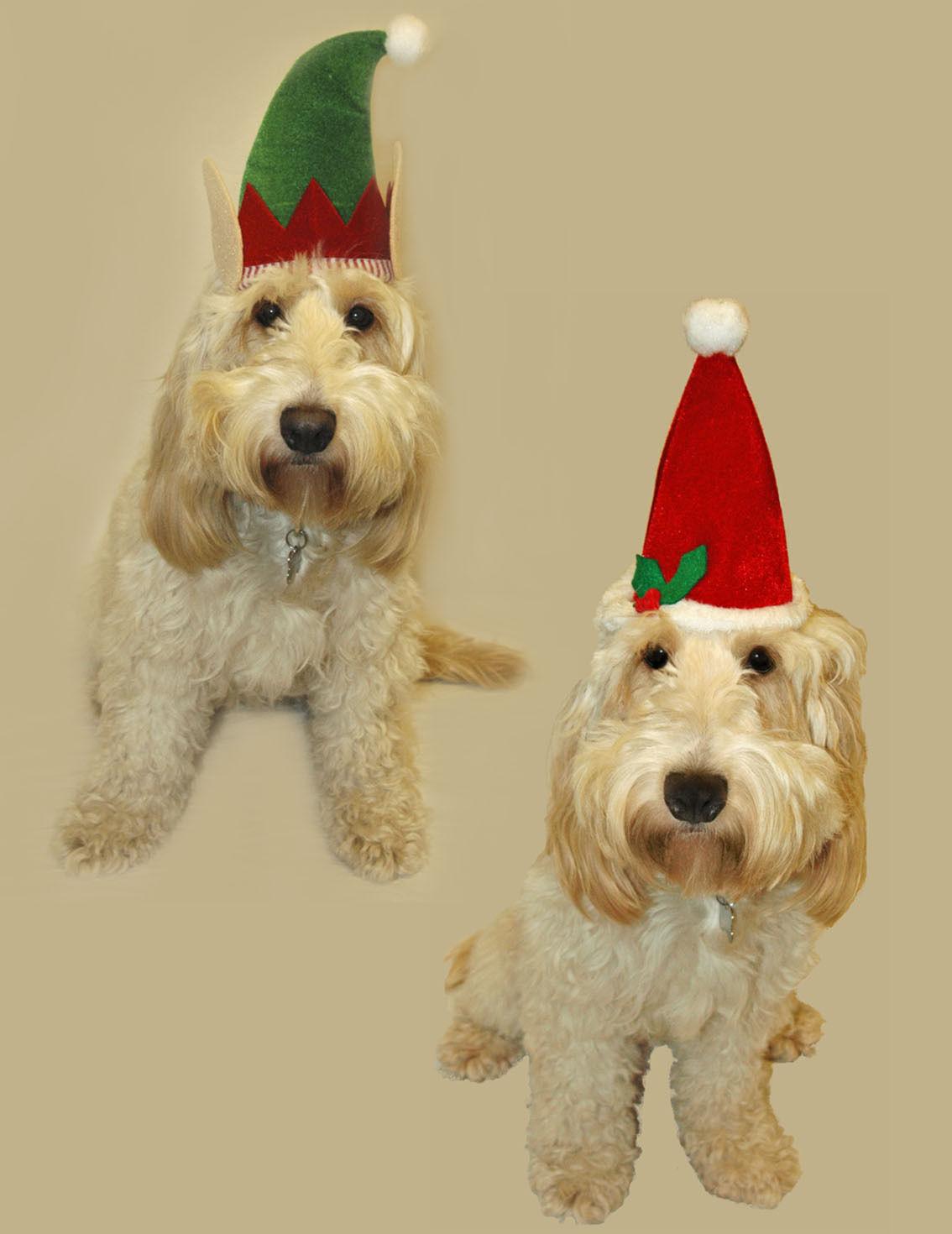 Perro mascotas Navidad Santa Hat - Sombrero de duende de Navidad para perros 45a8fc0b007