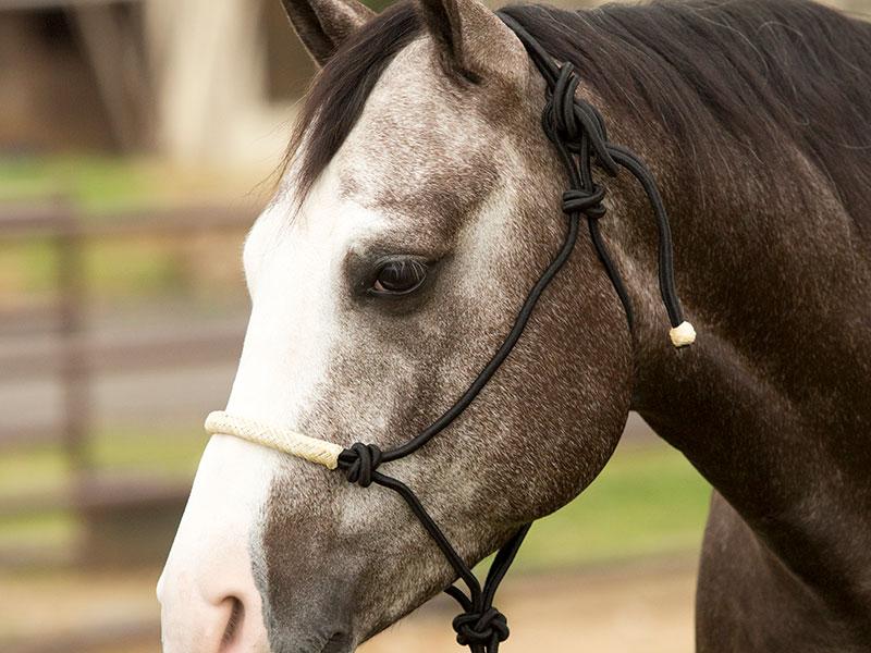 Kincade Leather Rope Headcollar Hunter Green//Brown